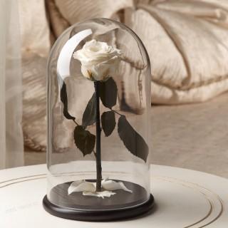 Белая Premium роза