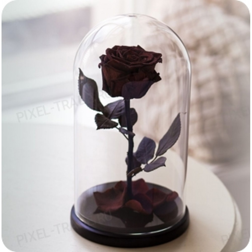 Бордовая Premium роза