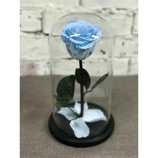 Голубая Premium роза