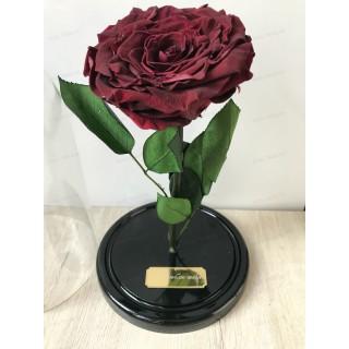 Бордовая King роза