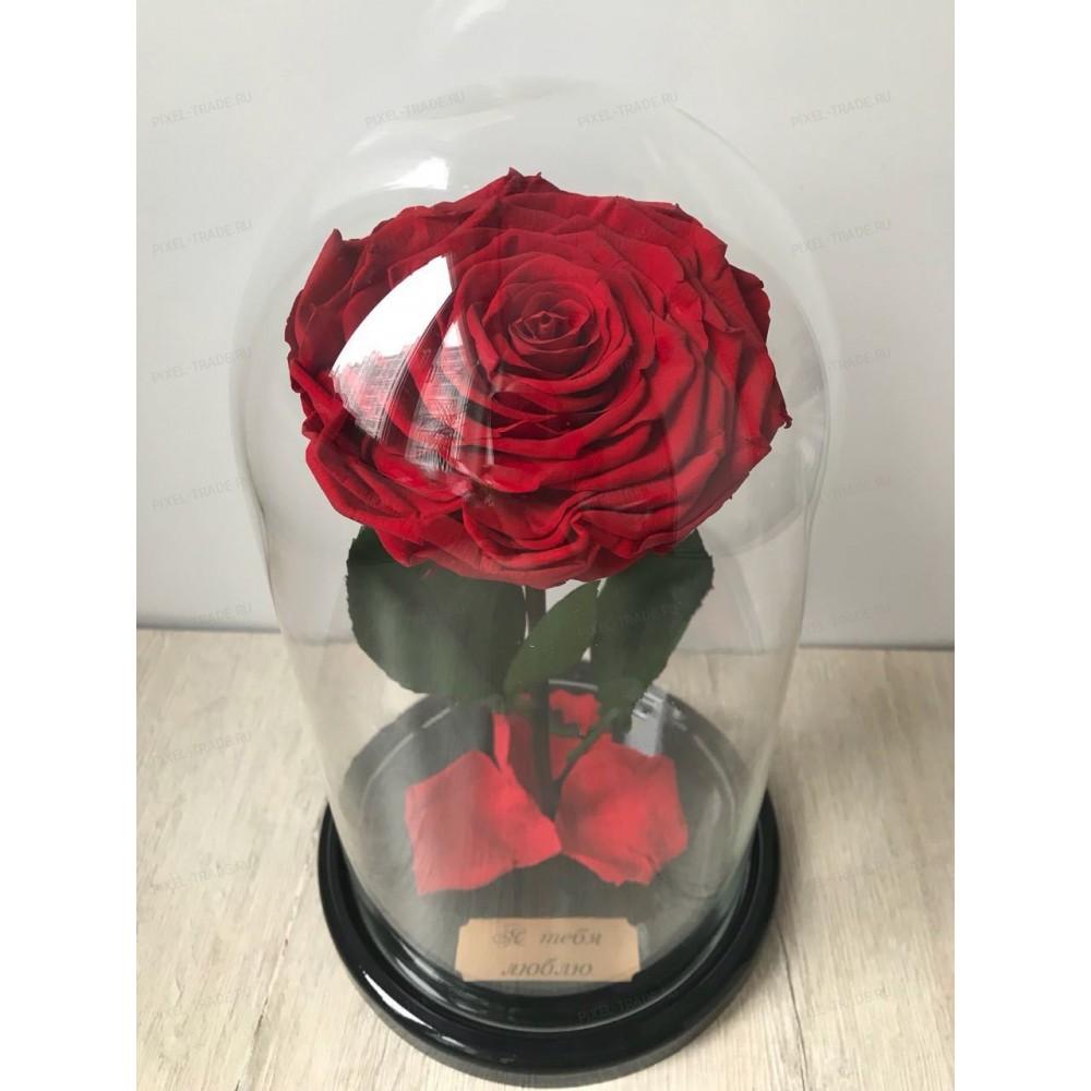 Красная King роза