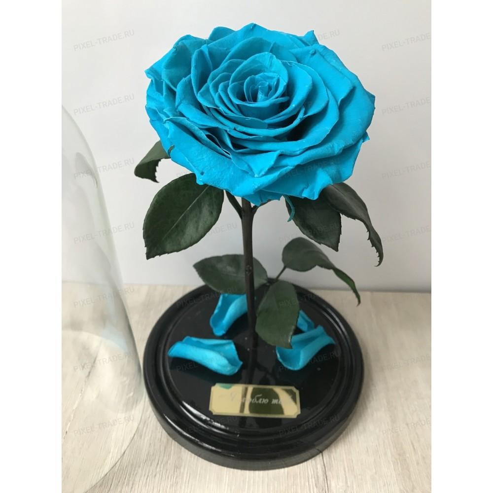 Океановая King роза